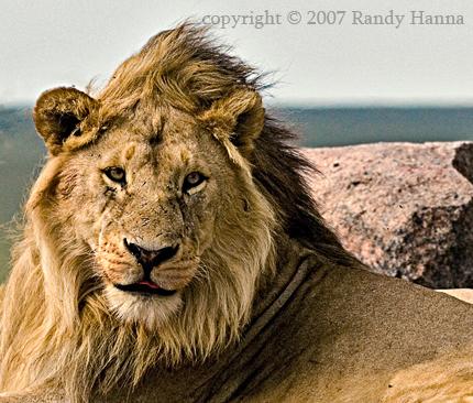 Serengeti National Park, Tanzania, Jan 2007  Nikon D2x, 200-400VR @ 260mm, ISO 400, 1/320sec @f9