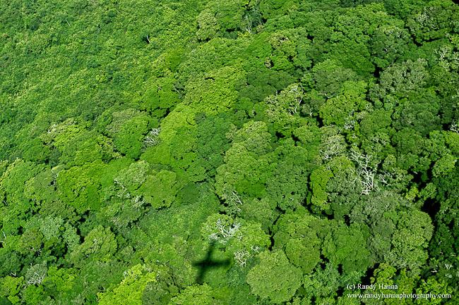 Bwindi-from-air