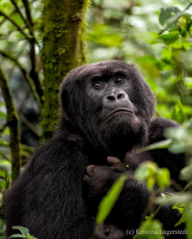 20150702_Rwanda_D700_8549-Edit.jpg