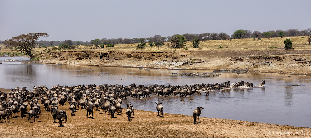 mara-river-crossing