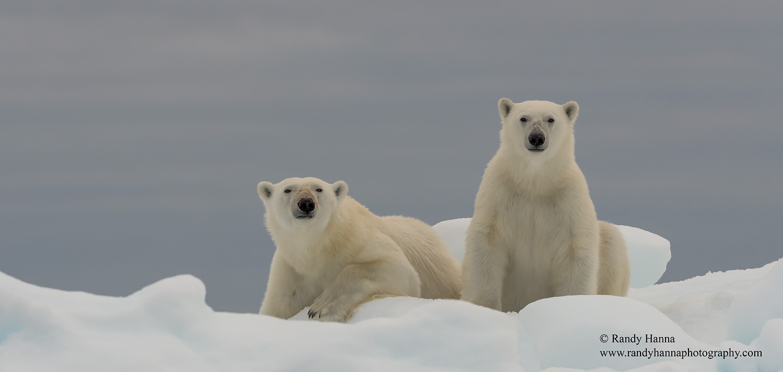 20150726_Svalbard_D810_5776-Edit-Edit-Edit-Edit-Edit.jpg