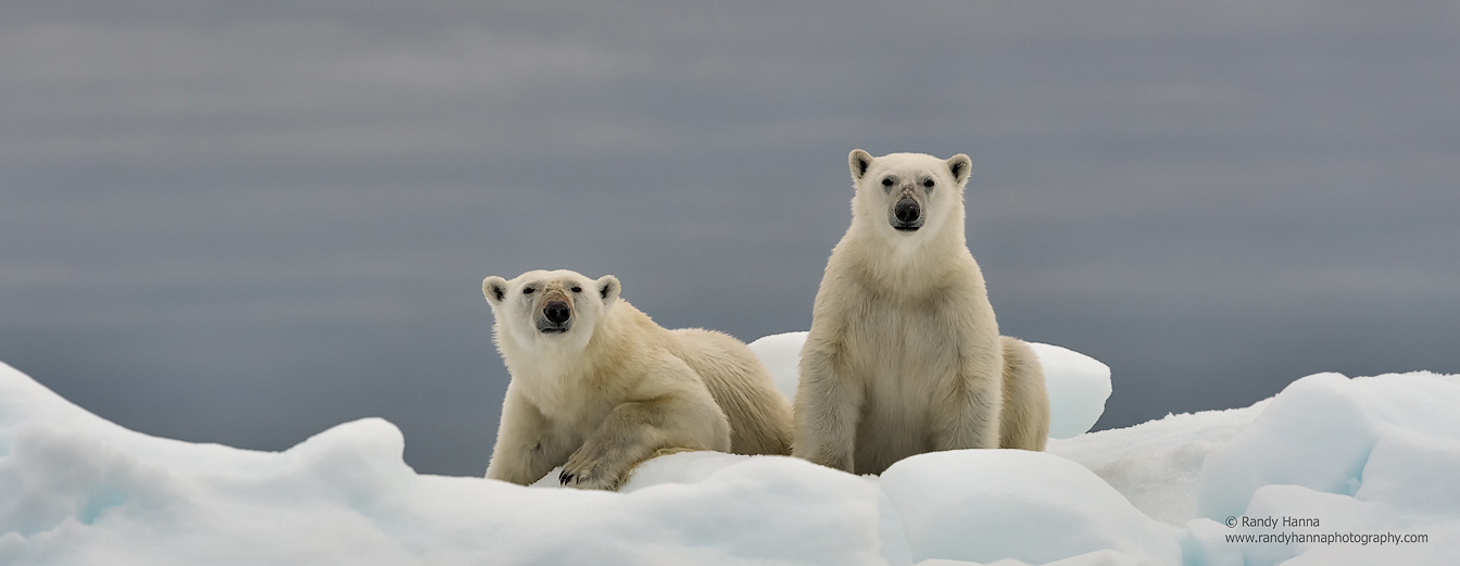 polar-bear2-blog