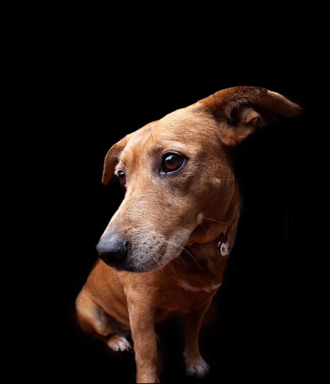Dog Portraits 2018-6211RETOUCHED-FORWEB.jpg