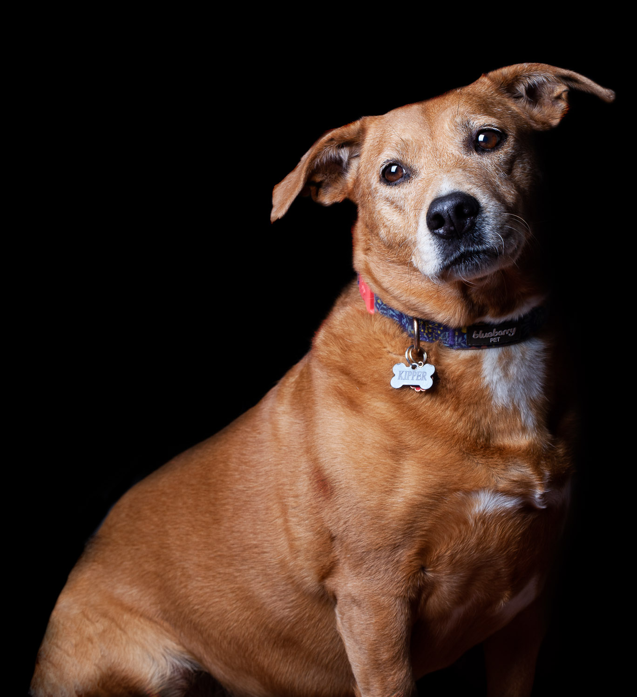 Dog Portraits 2018-6184RETOUCHED-Edit-FORWEB.jpg