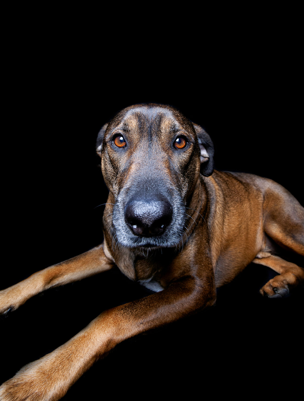 Carlo the Dog-6434RETOUCHEDBLACK-Edit-FORWEB.jpg