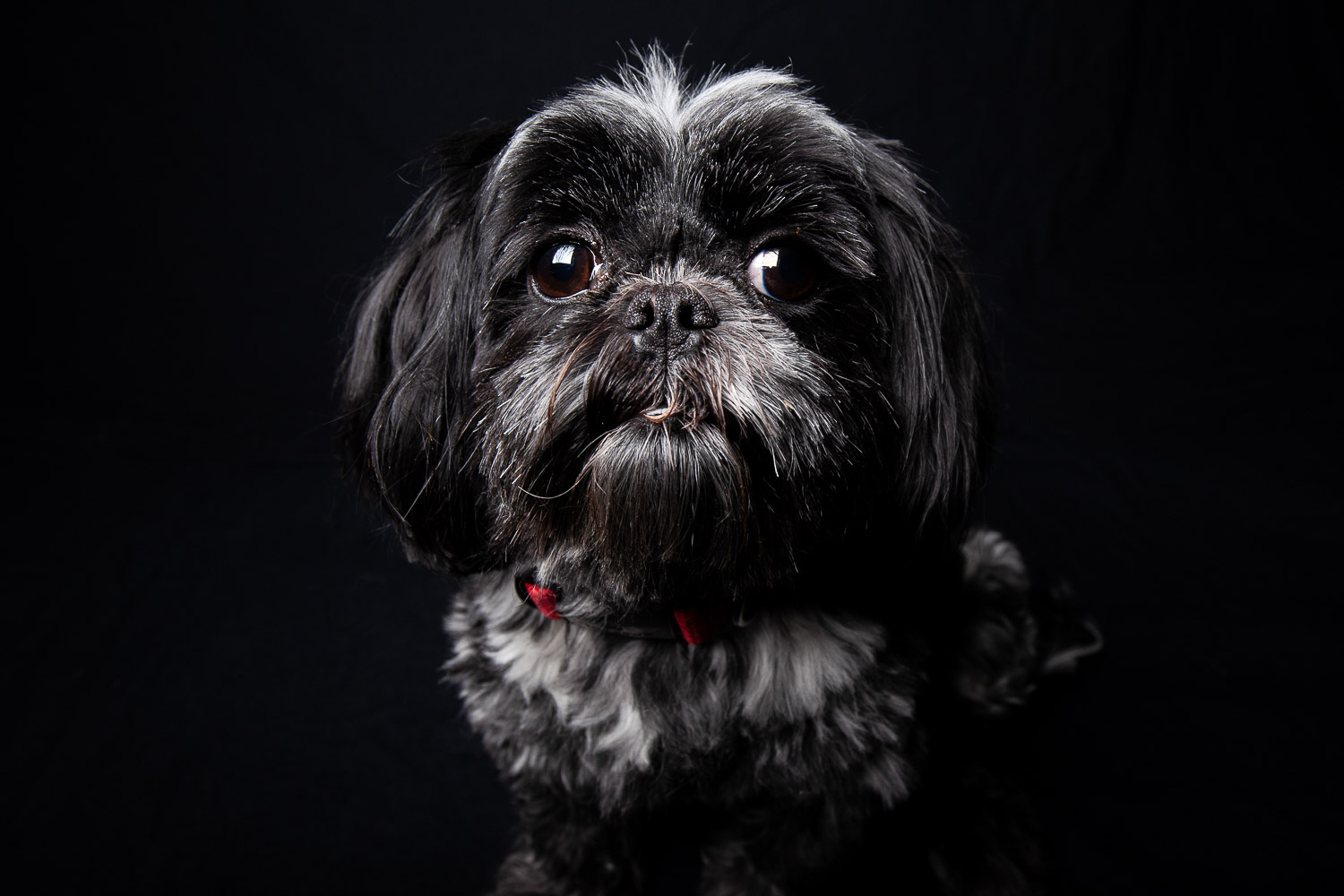 Ivy the Dog-6961RETOUCHED-FORWEB.jpg