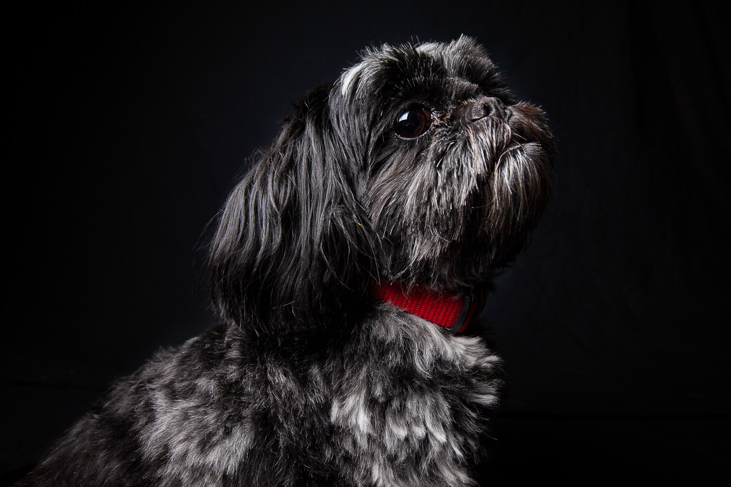 Ivy the Dog-6889RETOUCHED-FORWEB.jpg