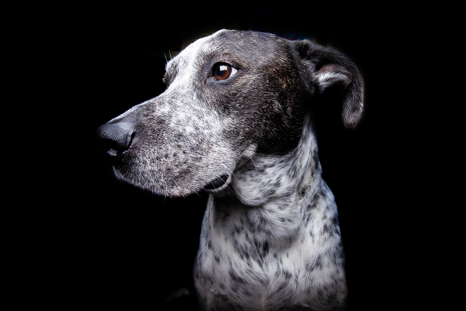 Oreo the Dog-7549RETOUCHED-FORWEB.jpg