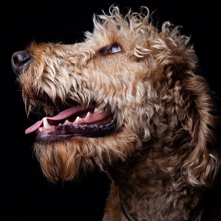 Henry+the+Dog