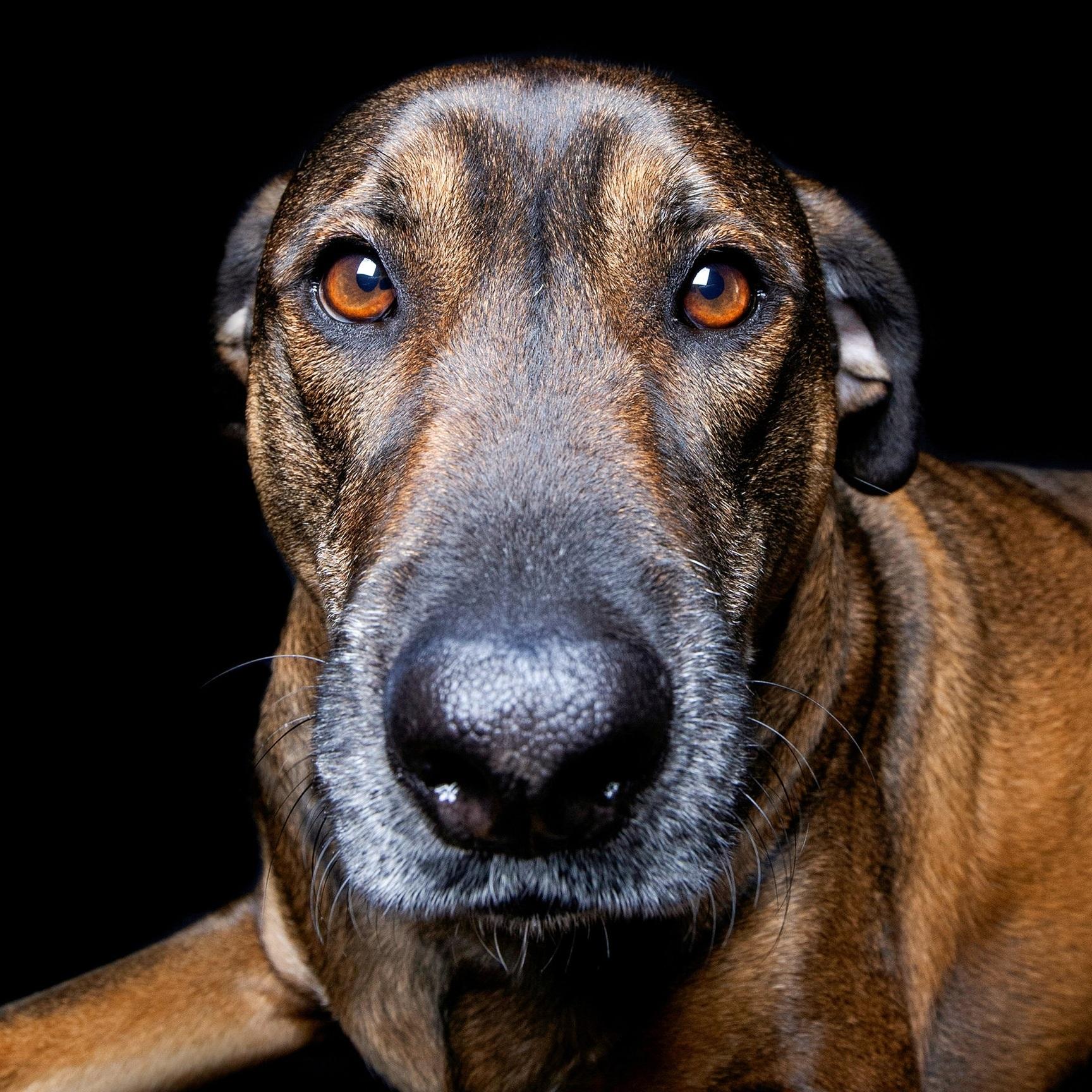 Carlo the Dog