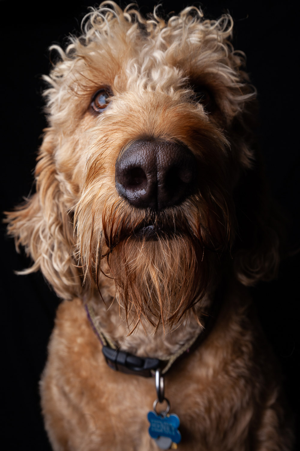 Henry the Dog-2055-RETOUCHED-FORWEB.jpg