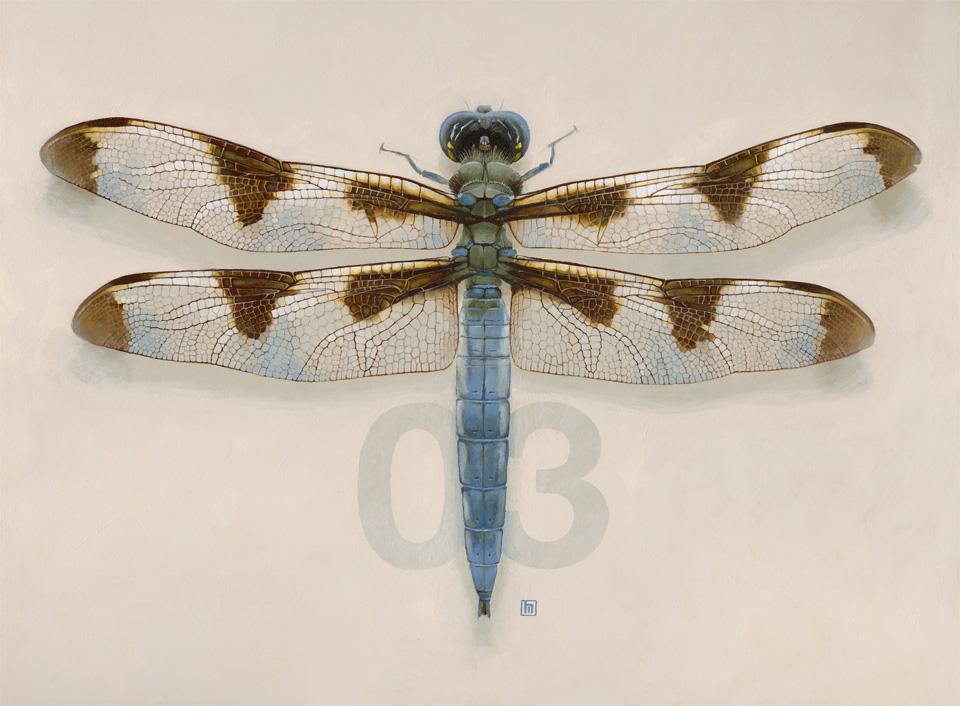 #3 Dragonfly
