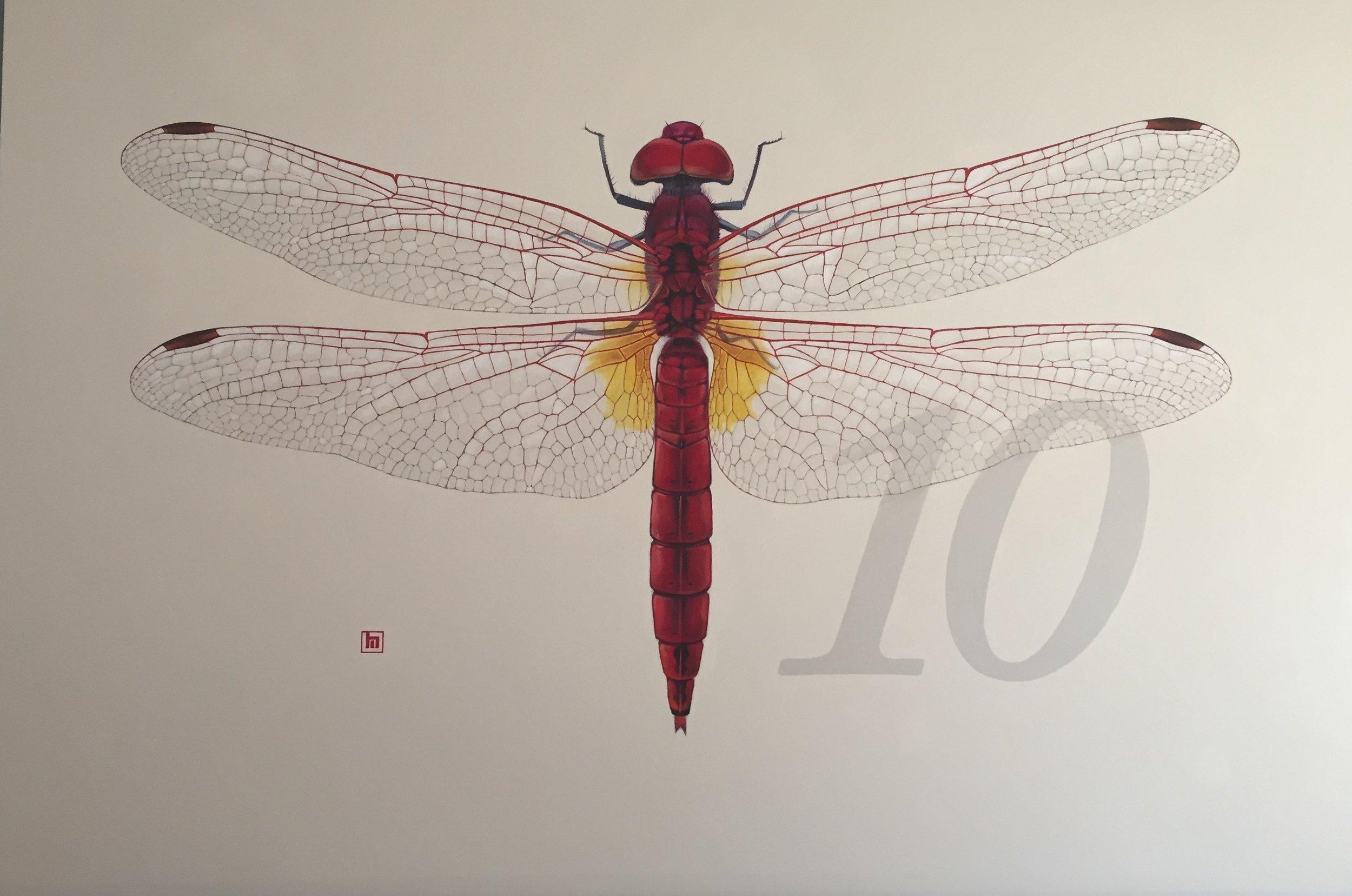 #10 Dragonfly