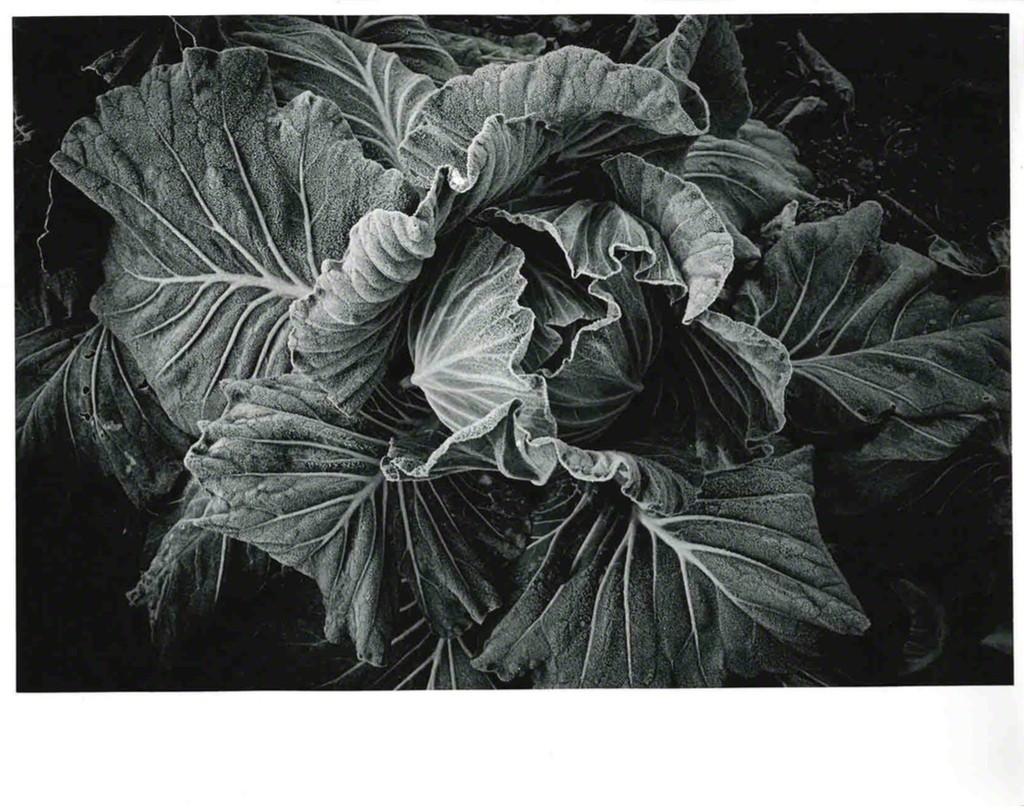 —24.Cabbage, 1989.