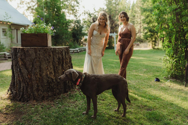 Twenty Mile House wedding dog photo