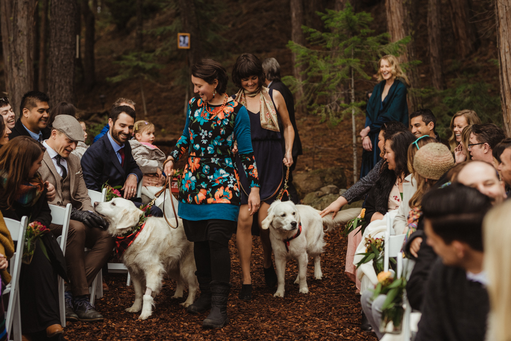 Twenty Mile House Wedding, dogs walking down the aisle photo