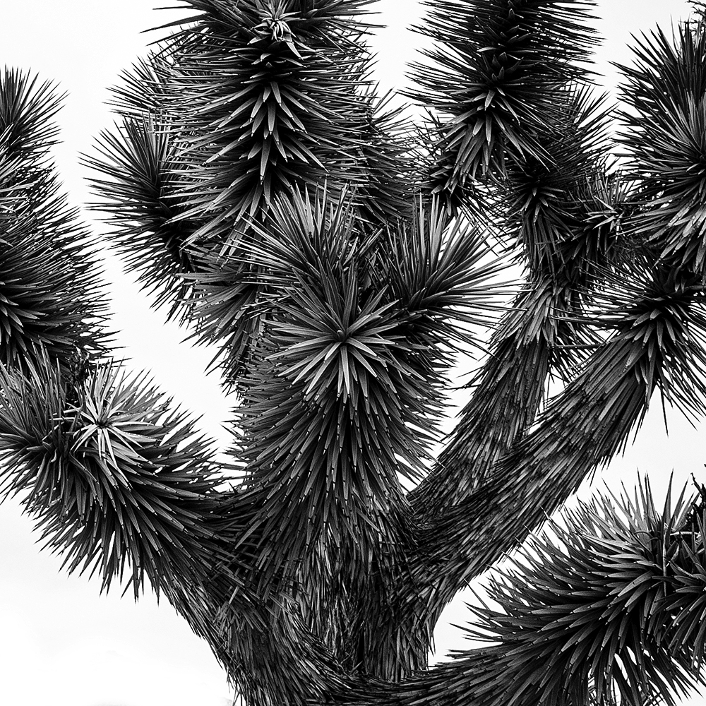 Copy of Steven Wohlwender, Photographer, Director, California USA