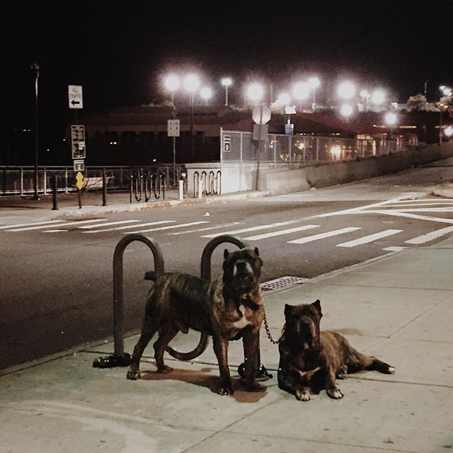 Guard dog chic