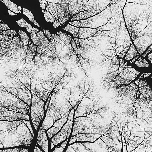 Skygazing in Central Park