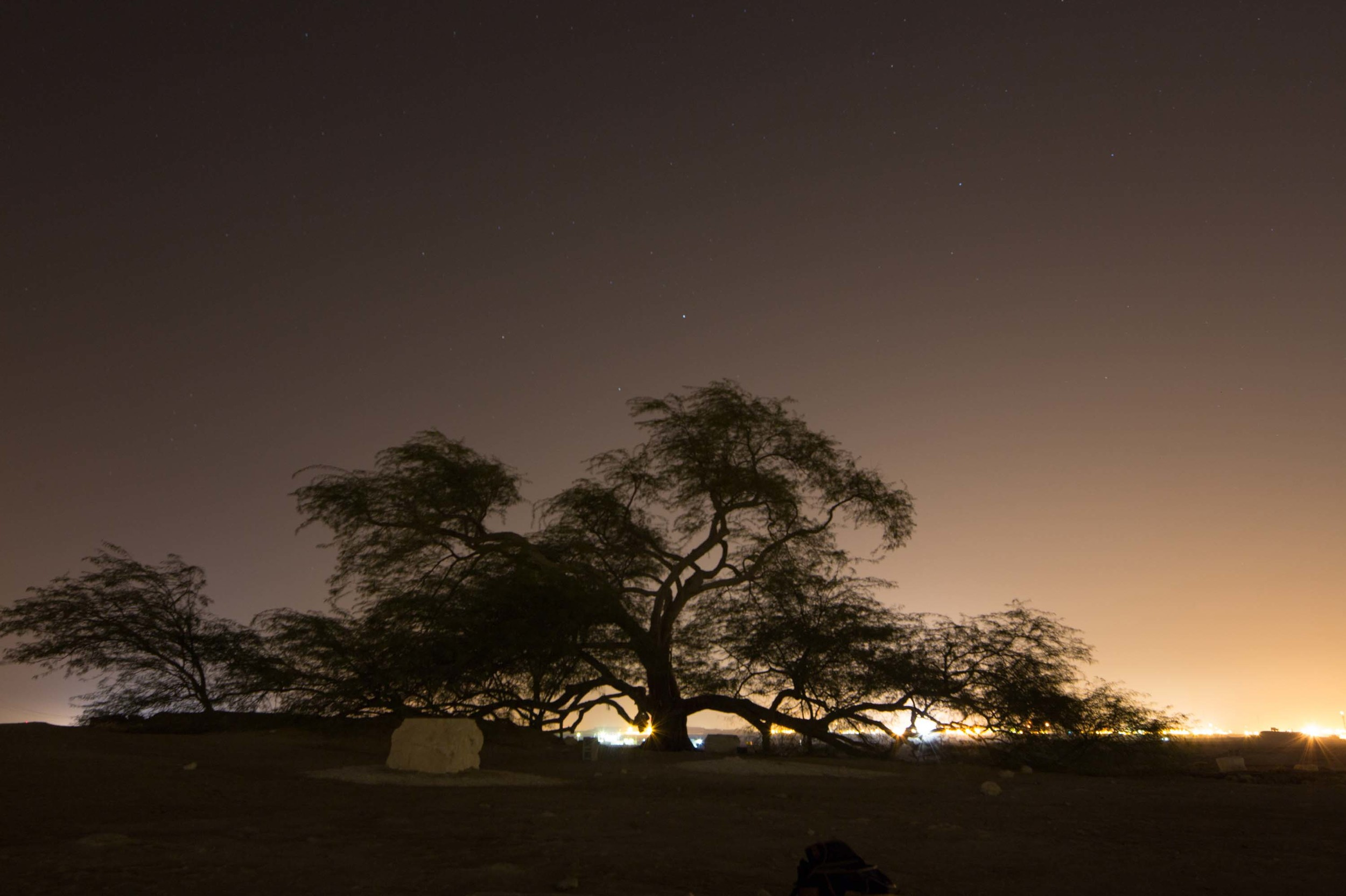 Long exposure allowed the tree to seem brighter than it actually was.