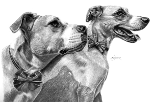 View Pet Illustrations