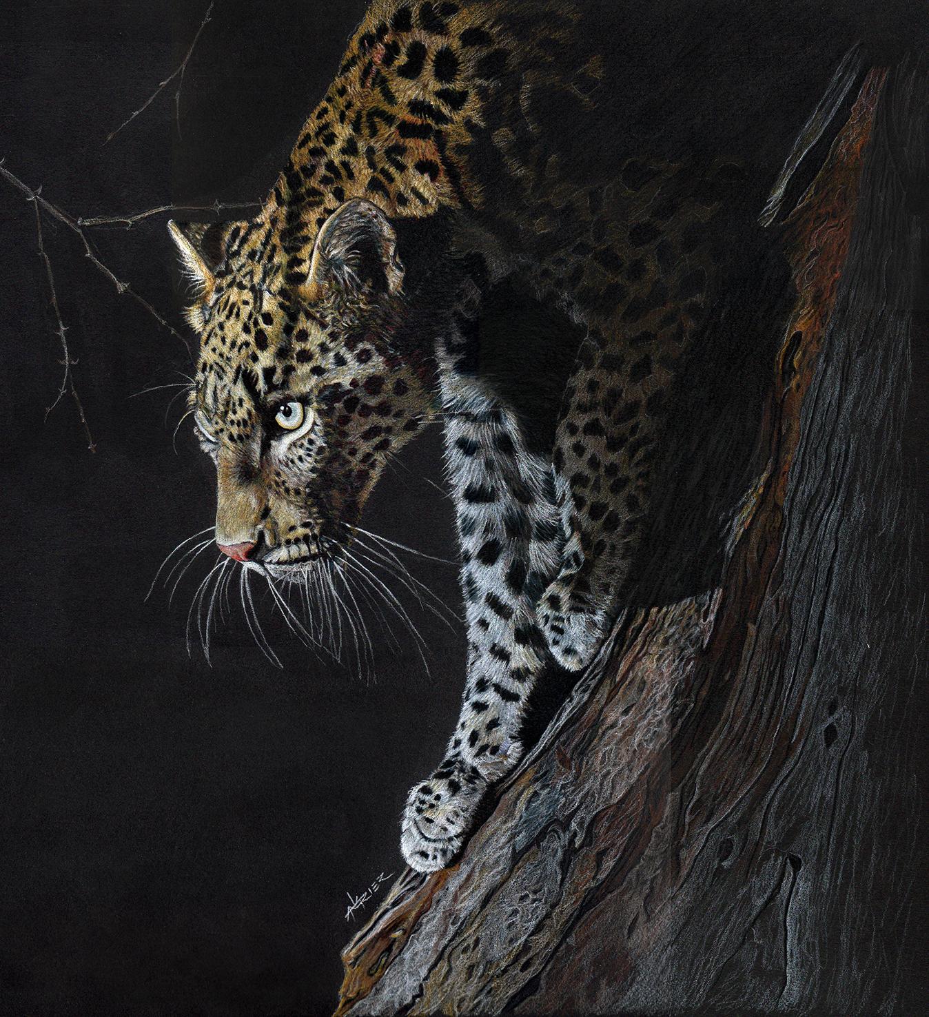 Leopard Drawing Final e.jpg