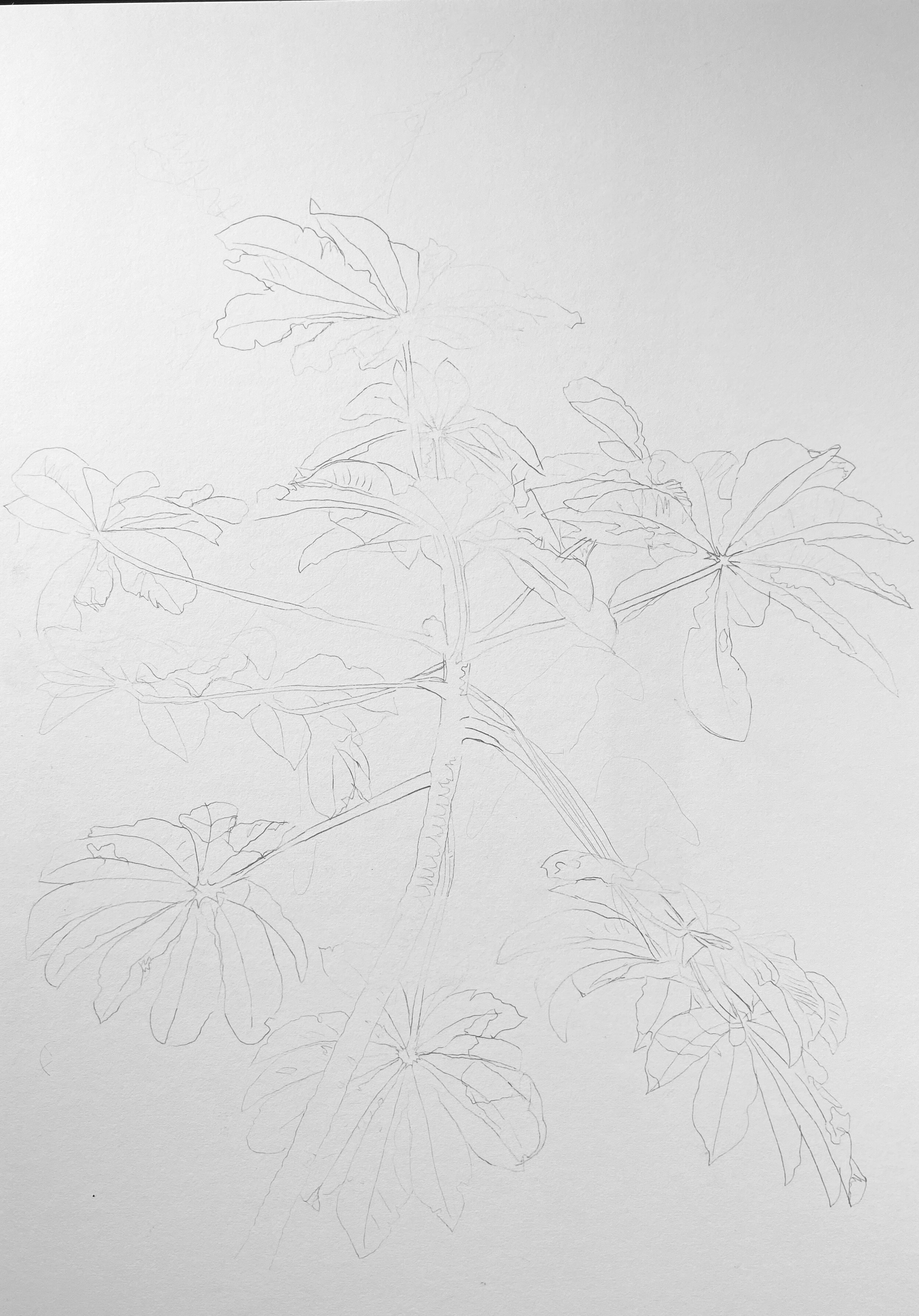 "Basic line drawing - Strathmore Illustration Board 20"" x 28"""