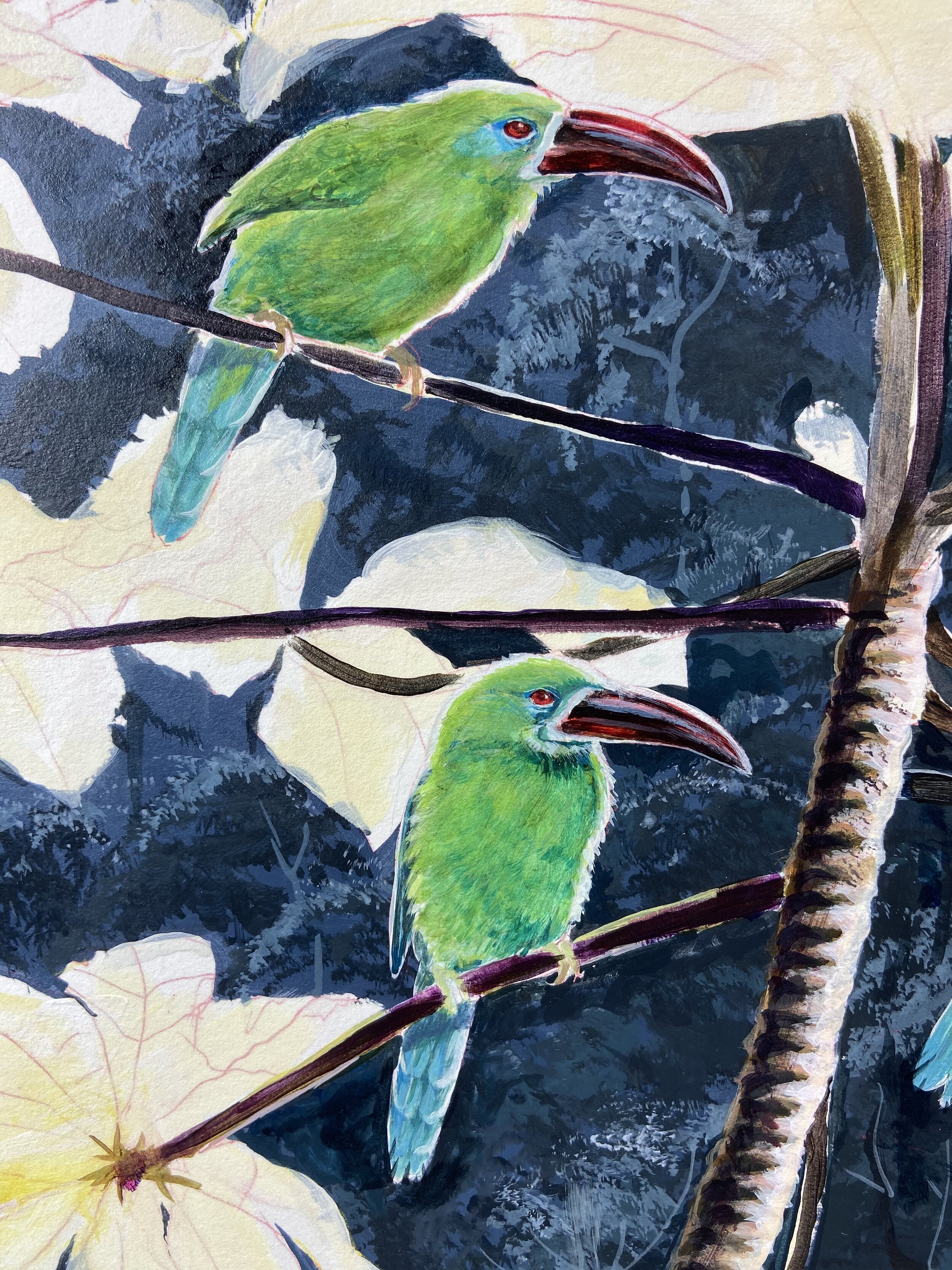 Basic color layout for the toucanets -