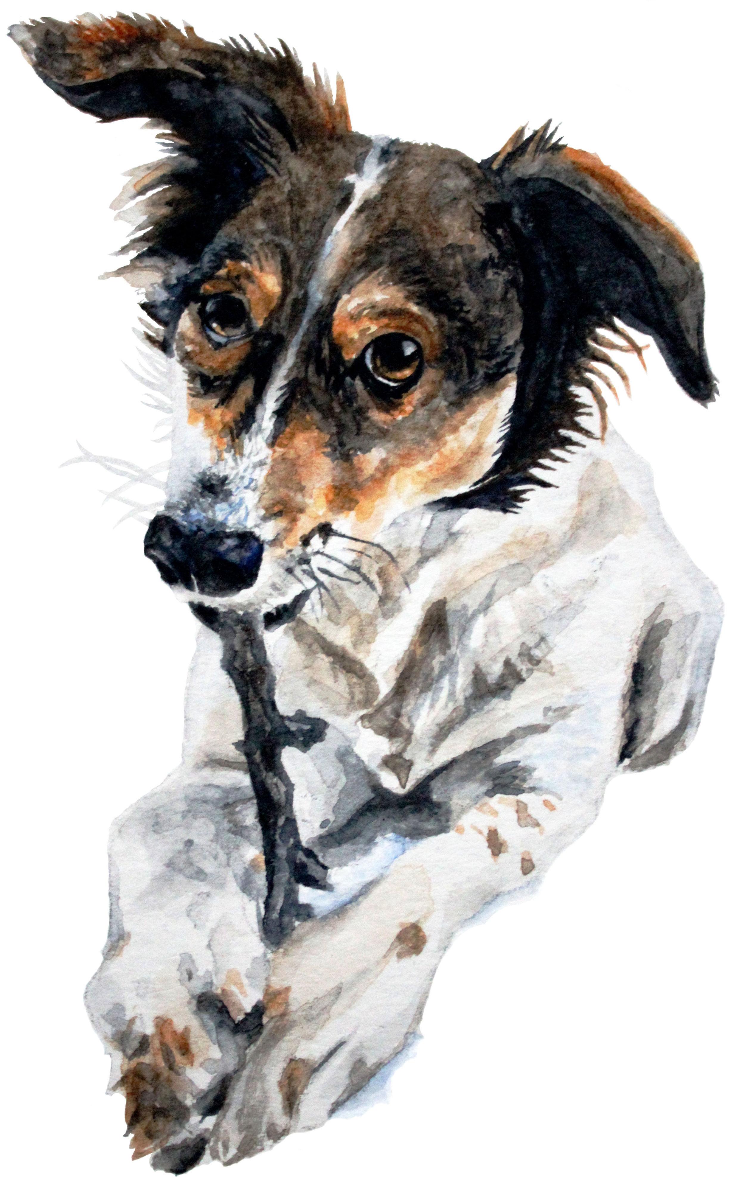 Meghan_Weir_megcutspaper_Rescue_Dog_Riley.jpg
