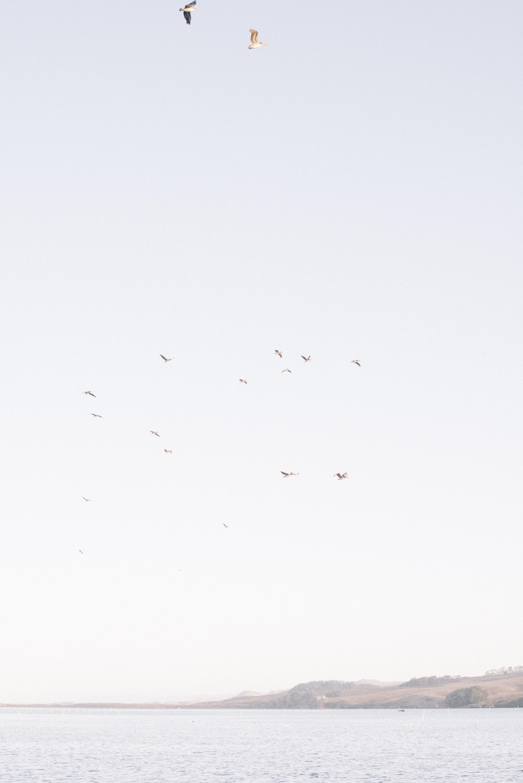 pelicans-3.jpg