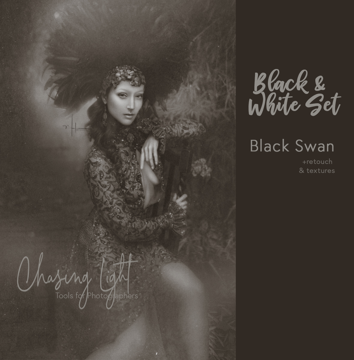 CL-BlackSwan2.jpg