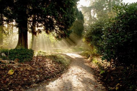 forests-landscapes-nature-paths-sunlight-1019556-480x320.jpg