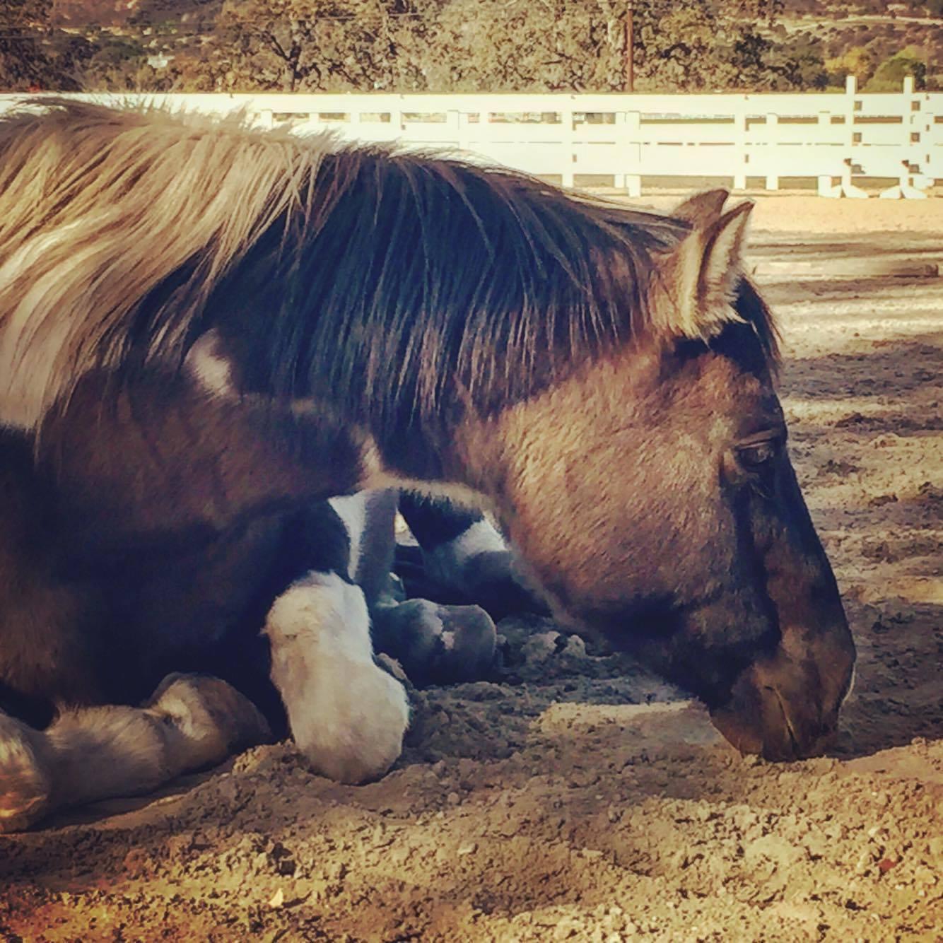 Equine Massage Bliss