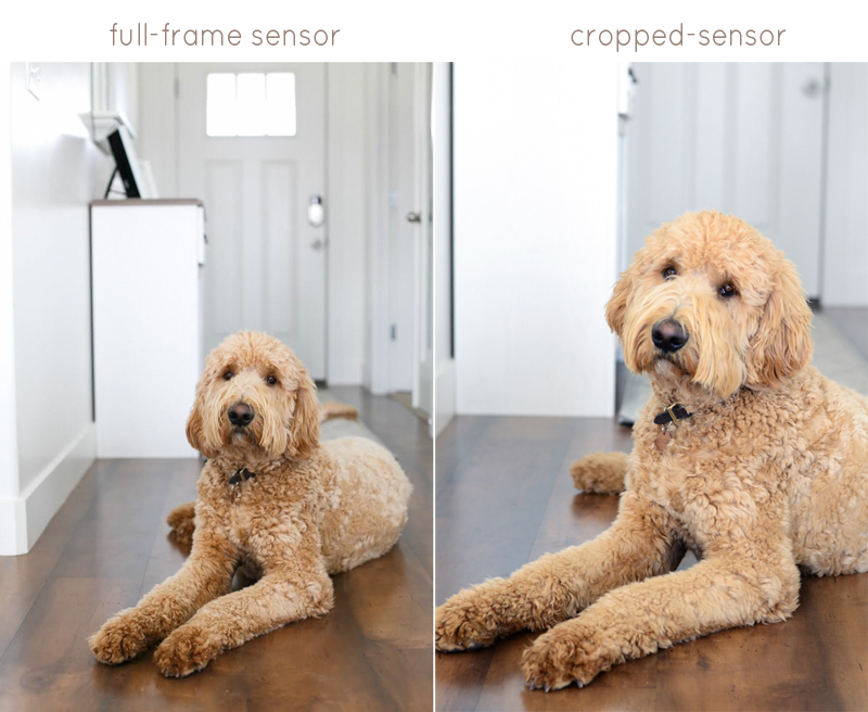 Understanding the Difference Between a Full-Frame Sensor Camera vs. a Cropped-Sensor Camera - www.mommatography.com