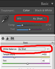 How to Correct White Balance in Post - www.mommatography.com