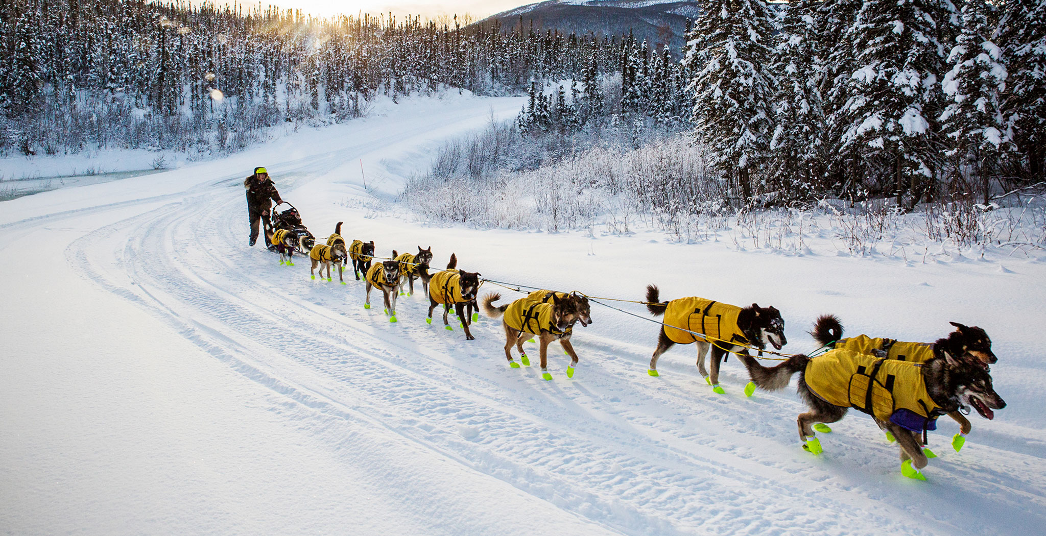 mushing dogs .jpg