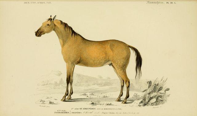 Horses-2-063 - Horse byartvintage1800s.etsy.com i s licensed under  CC BY 2.0