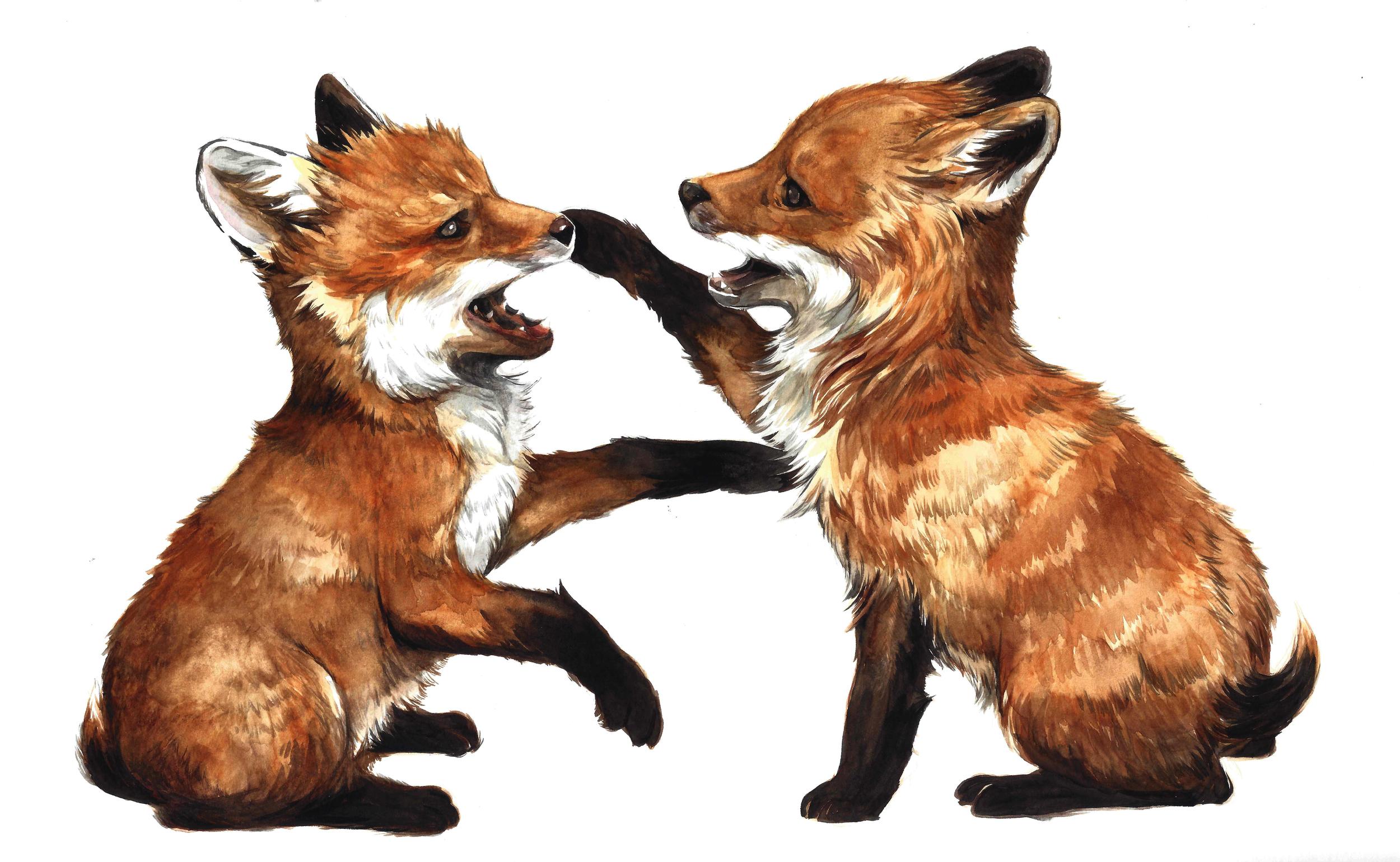 fox_watercolour.jpg