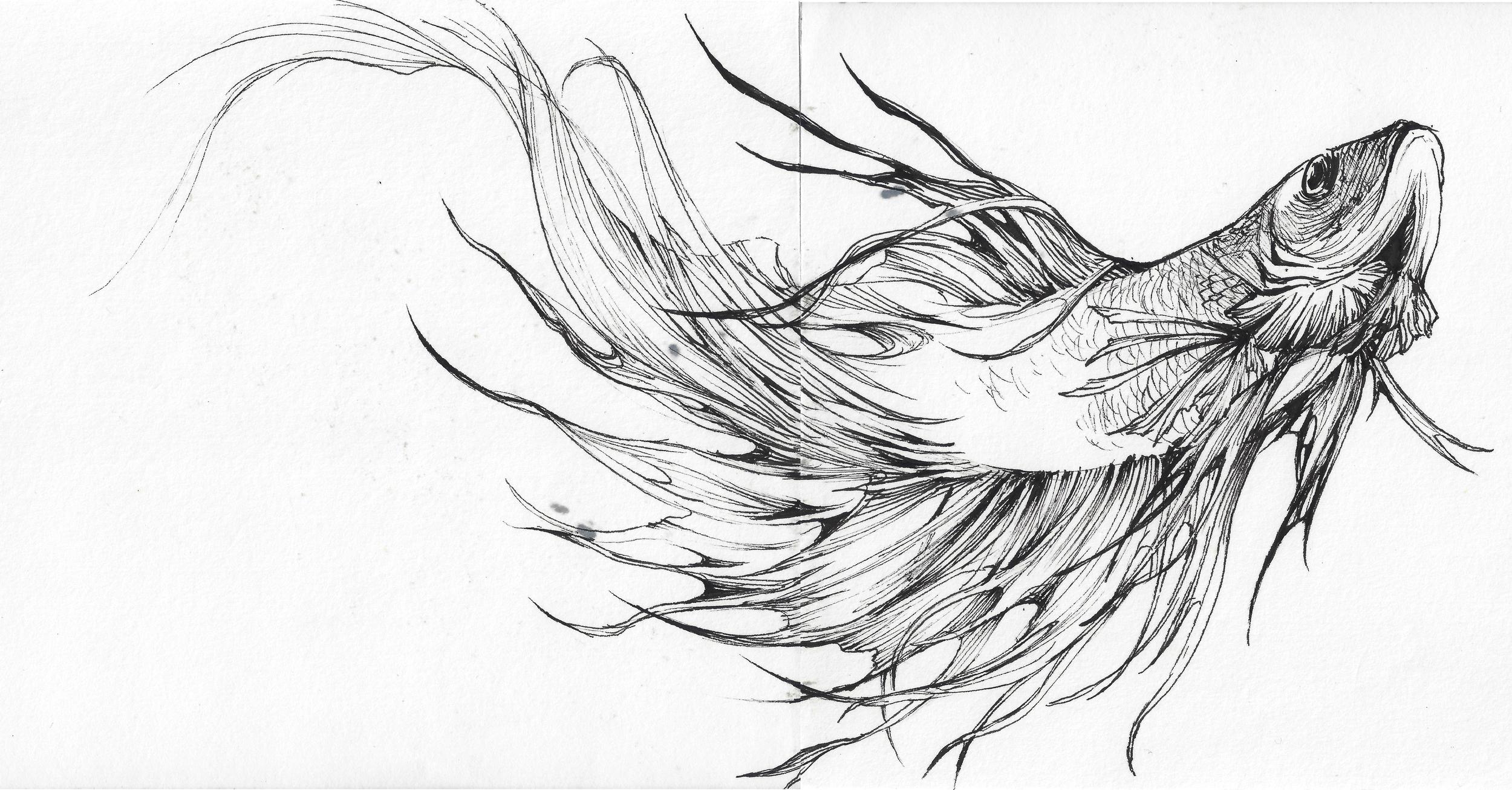 fish_both_pen_600.jpg