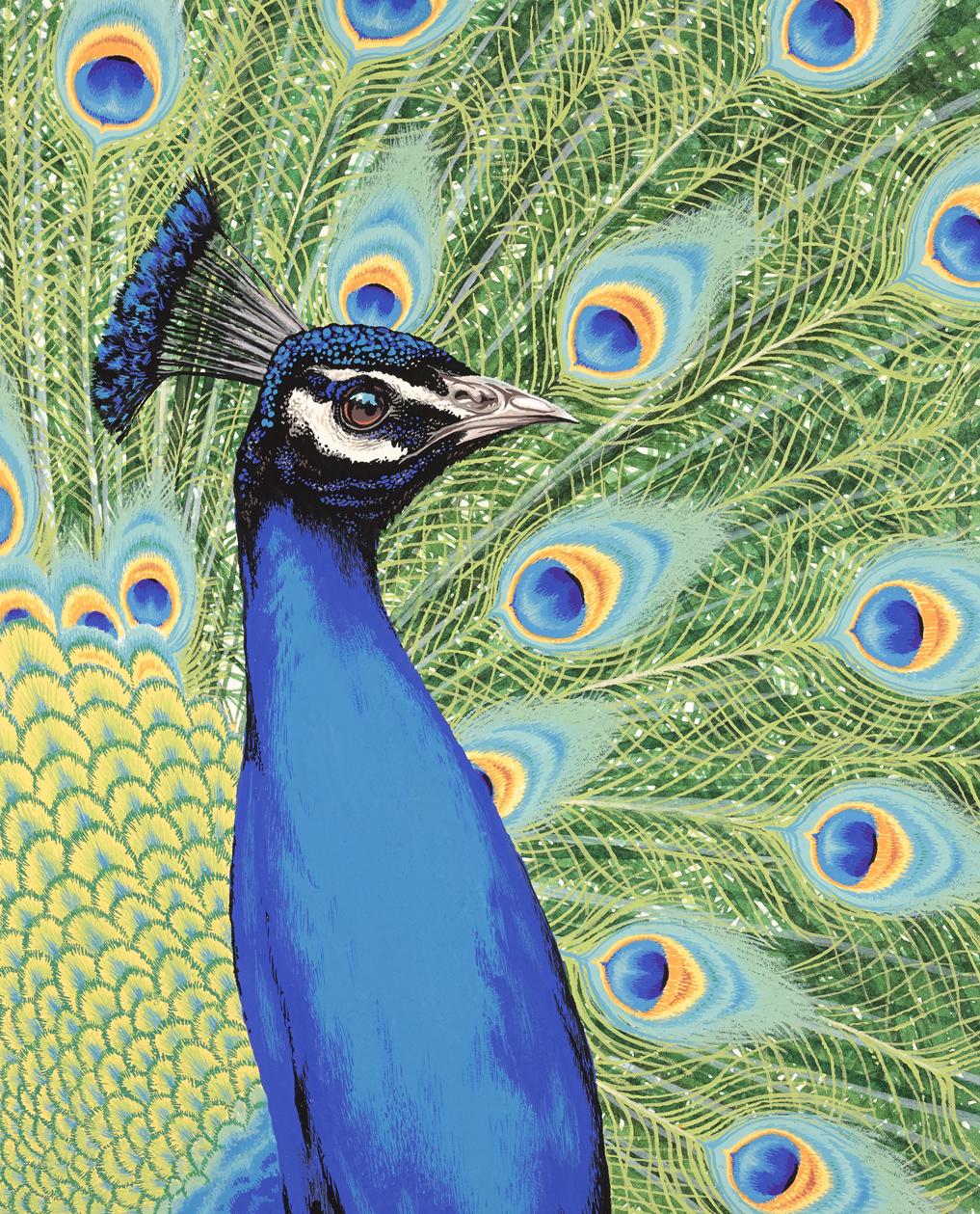 Peacock_v2(L).jpg