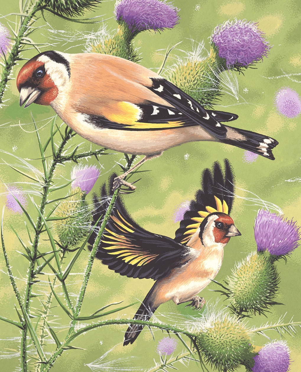 Goldfinch_V2(L).jpg