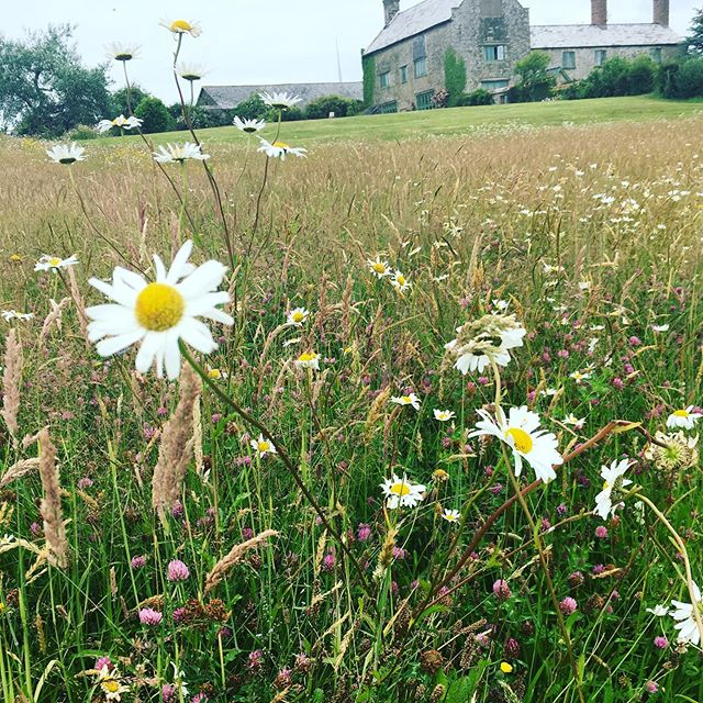 Ashbarton weddings#weddingflowers #weddingflowersdecor #wildflowermeadow #makingbeeshappy #freelanceflorist #northdevoncoast