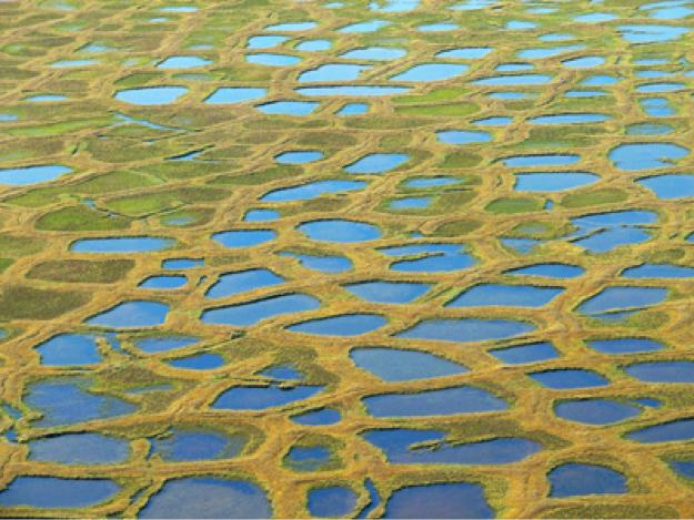 Jorda har feber og permafrost smelter til sjøs og på land. Dette øker metangassutslippene som her på gress-slettene i Sibir. Denne utviklingen gjør at det haster å få de menneskeskapte utslippene ned.    Foto: Konstanze Piel
