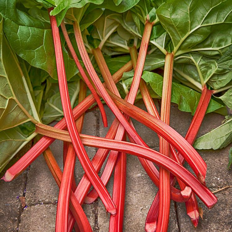 El ruibarbo, un vegetal con vocación de fruta , es uno de los favoritos del Comedor Rural en Deveras. Lo usamos en siropes, tartas y mermeladas. El cultivo es perenne (o sea que hay todo el tiempo).