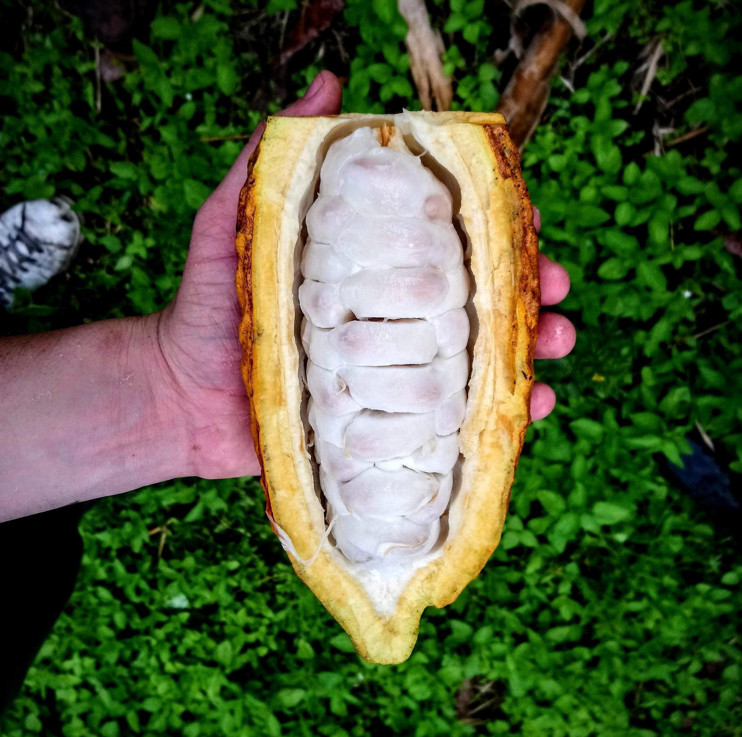 Los productores tienen una incidencia directa en los sistemas biológicos y por consiguiente, una responsabilidad inherente con estos. Hemos venido acompañando productores y fincas en Colombia, ayudándolos a definir proyectos que los terminen conectando con una filosofía sustentable y con los otros actores del sistema de alimentos.