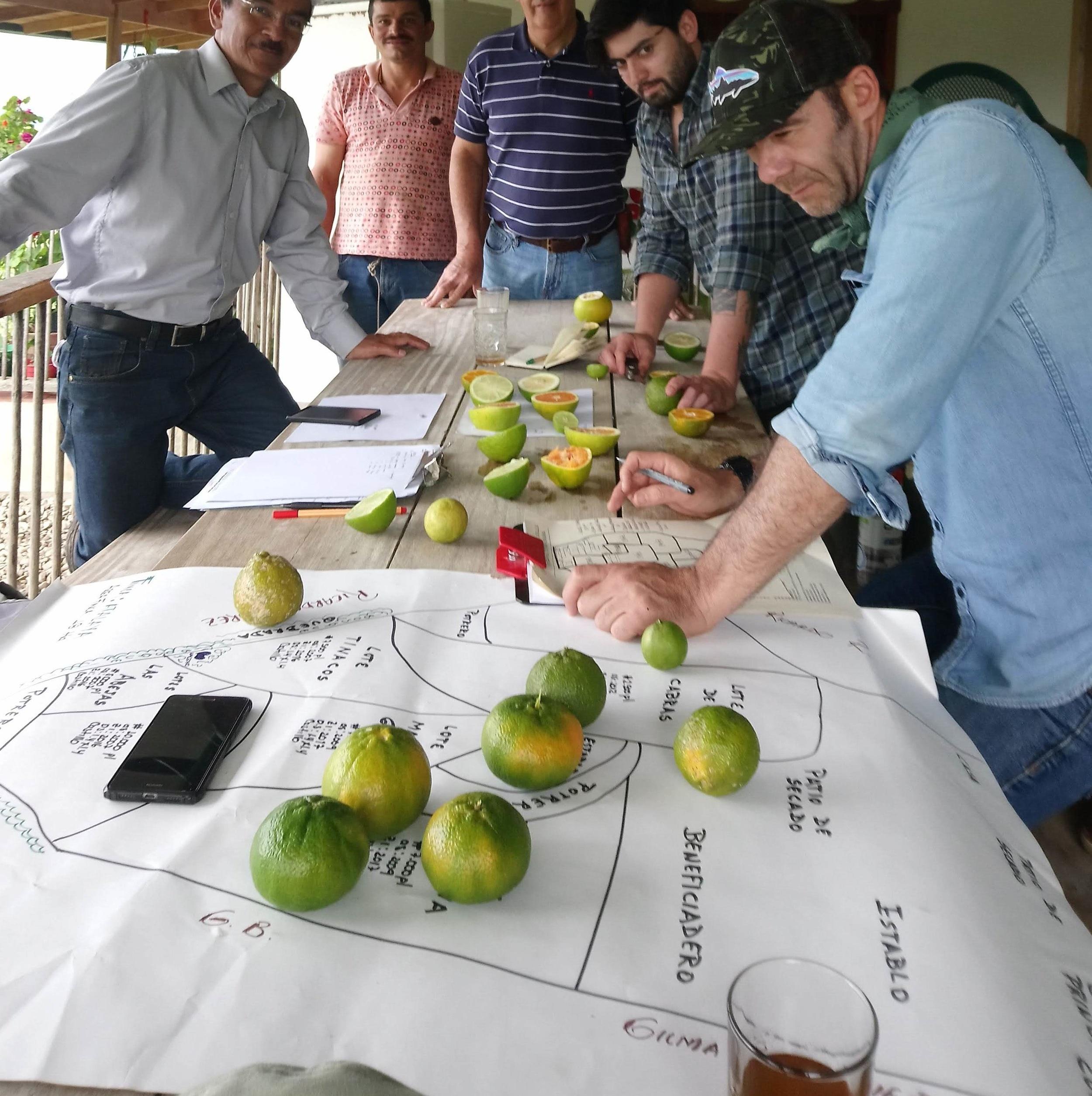 Mediantes esquemas colaborativos, acompañamos a conceptualizar y desarrollar estrategias para proyectos relacionados con la producción agrícola sostenible y el consumo responsable.
