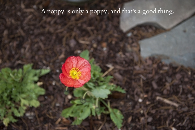 A poppy is only a poppy :)