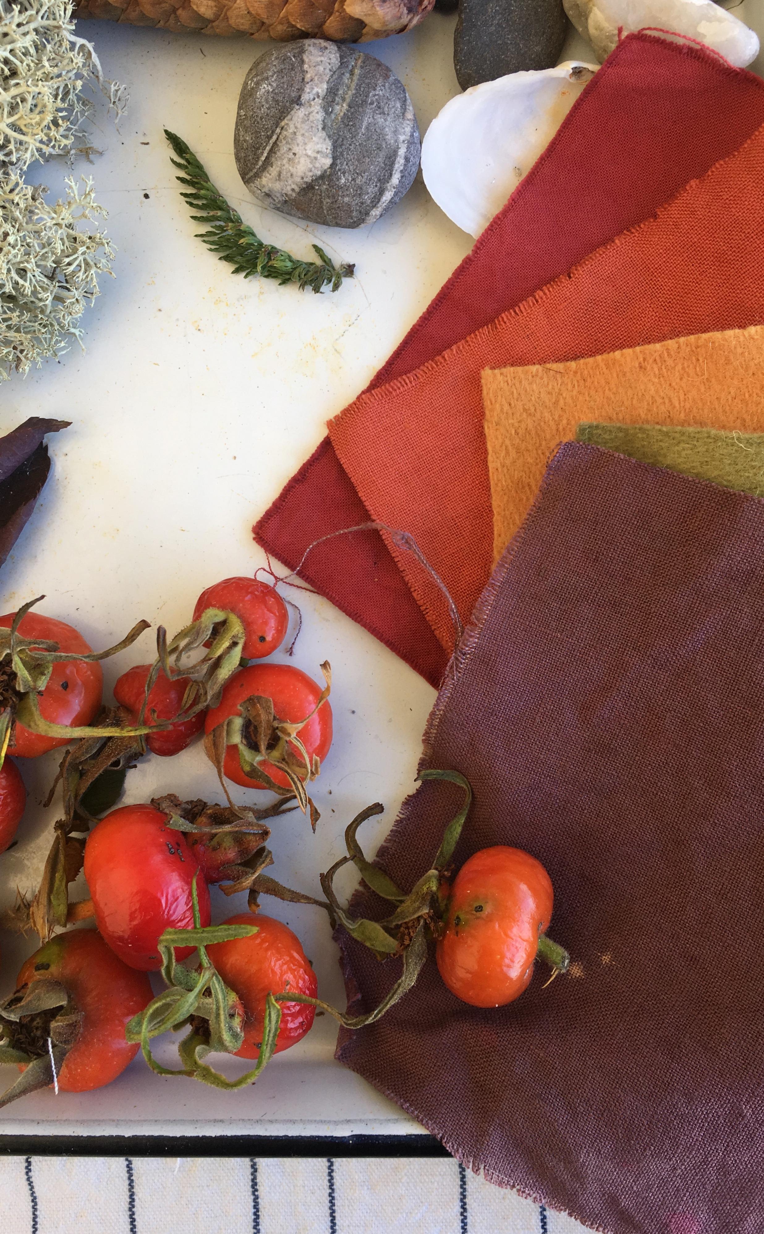 Wild rosehips, swatches in deep, vibrant tones