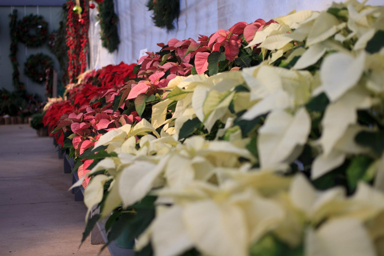 2011-11-12_14-56-19.jpg