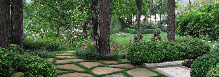 Aloha Lawn, Tree and Pest Inc for all of your tree treatment services.
